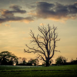 rectory tree