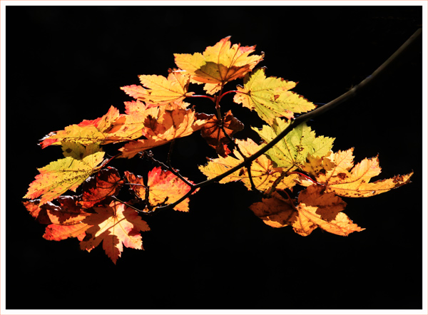 Leaves (3)