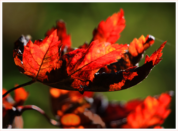 Leaves and Light (2)