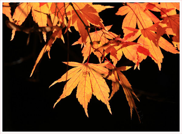 Leaves and Light (3)
