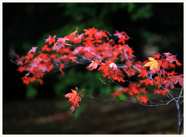 Leaves and Light (4)