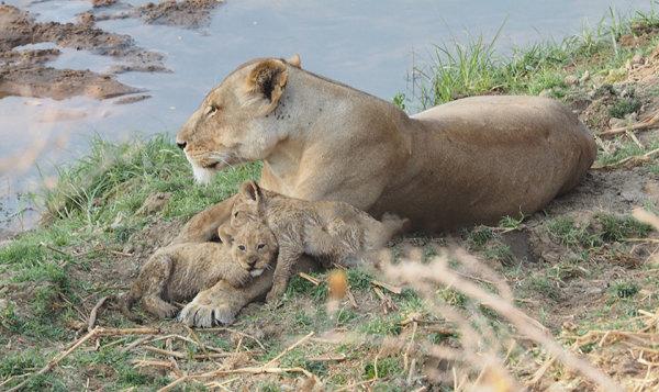 Resting with Mum