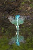 005 Kingfisher