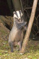 001 Badger