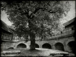 Walled Tree