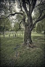 Under a twisted tree, Neuville Saint Vaast