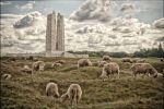 Grazing in the craters - Vimy Ridge