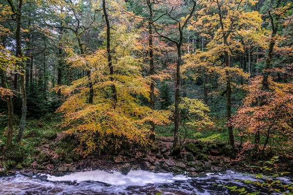 Autumn Colours along the banks of the River Erme, Ivybridge, Devon.