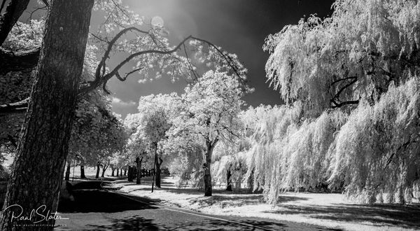 Black and White infrared landscape - Central Park, Plymouth