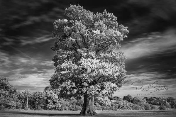 Infrared image, Filham Park, Ivybridge, Devon