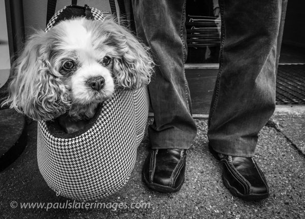 Candid street portrait of a pet.