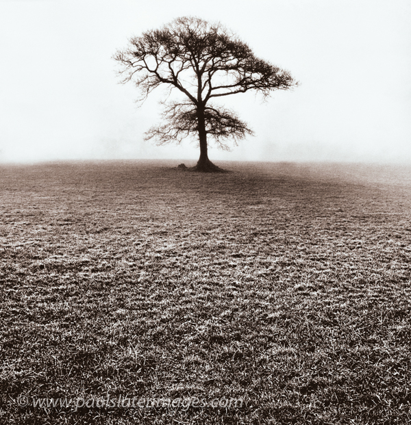 Solitary tree in a Devon field.