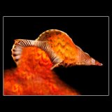 LAVA SHELL 20X16ins £97.50