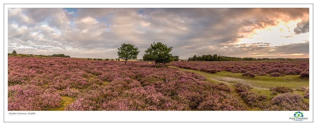 Roydon Common 2017