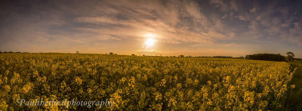 Golden Fields Panorama