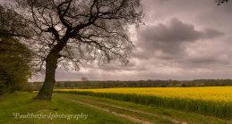 Spring colour 2015