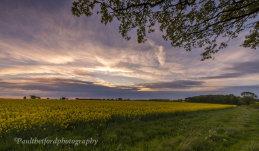 Golden Fields 2