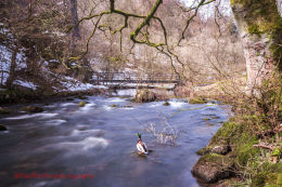 Dovedale 3