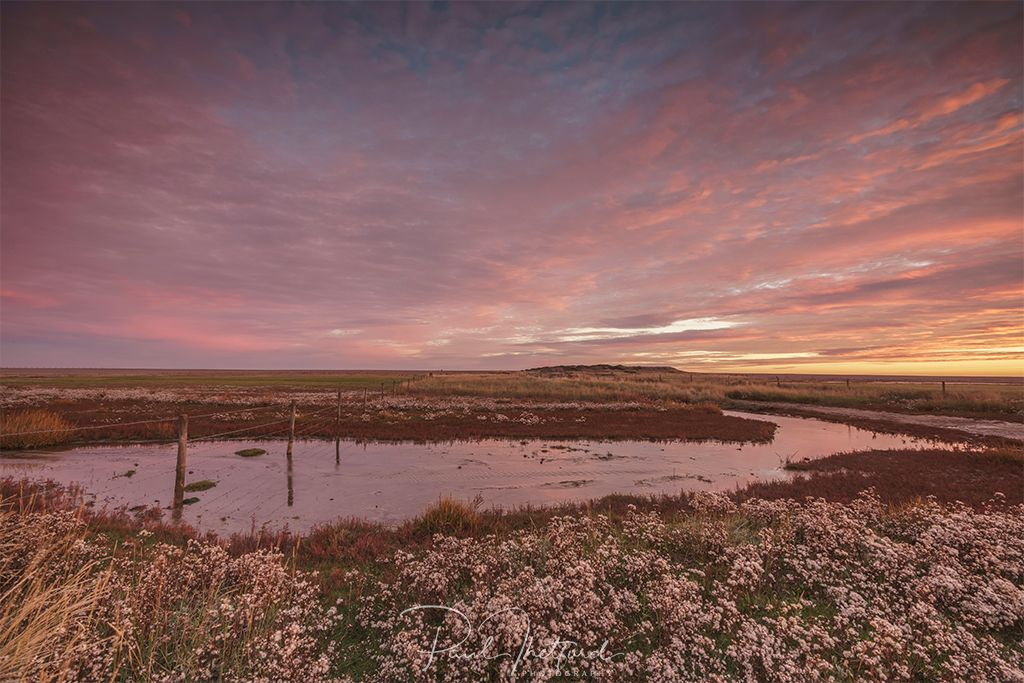 Dawn Salthouse 2