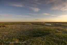 Spring colour Blakeney Marsh