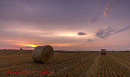 Norfolk Harvest 2014