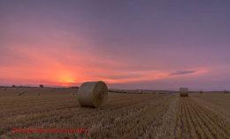 Norfolk Harvest 2014 (2)