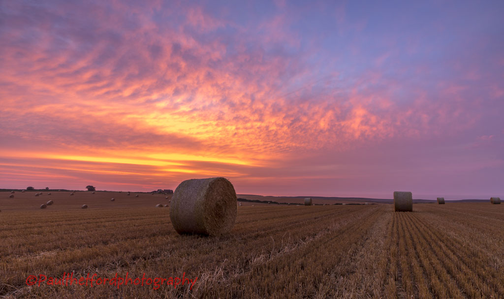 Norfolk Harvest 2014 (3)