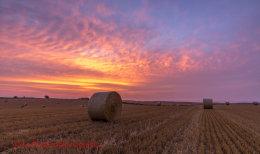 Norfolk Harvest 2014 (3)