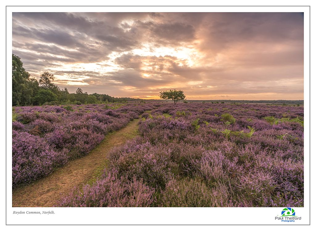 Roydon Common 2017 3