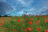 Norfolk sky over poppy field 2