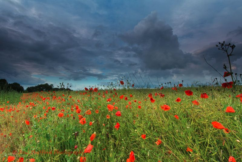 Norfolk sky over poppy field 3