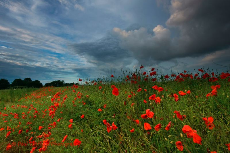 Norfolk Sky over poppy fields