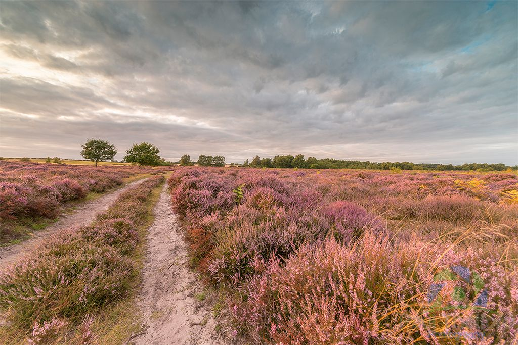 Roydon Common 2016 3