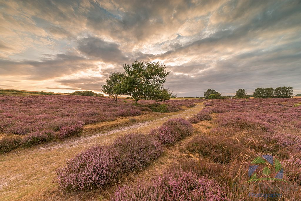 Roydon Common 2016 4