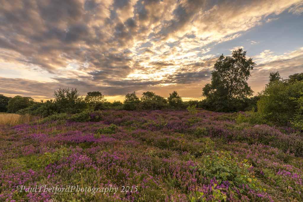 Norfolk Heather 3