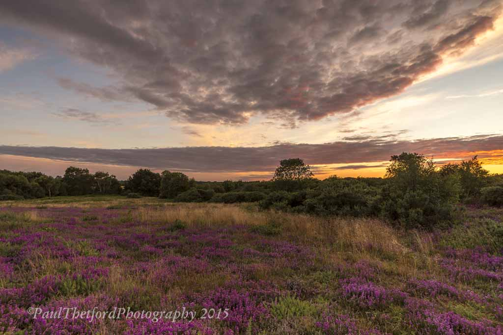 Norfolk Heather 6