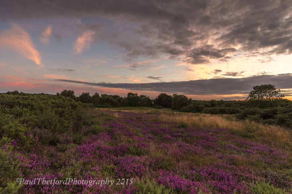 Norfolk Heather 7