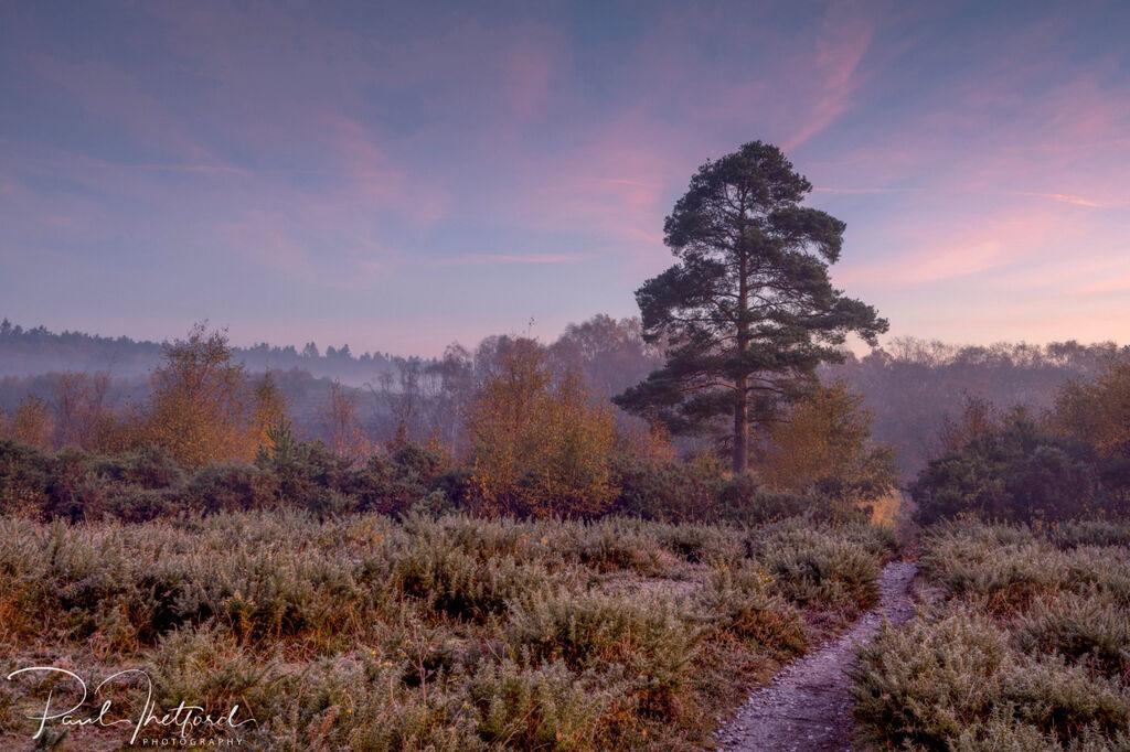Norfolk Autumn colours