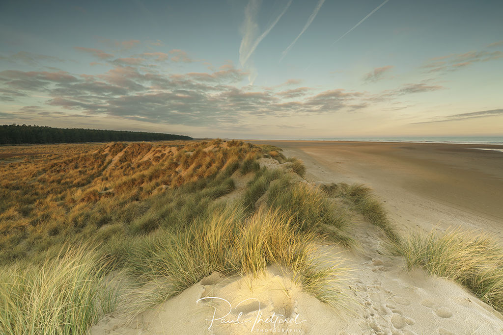 Norfolk coast Dunes 4