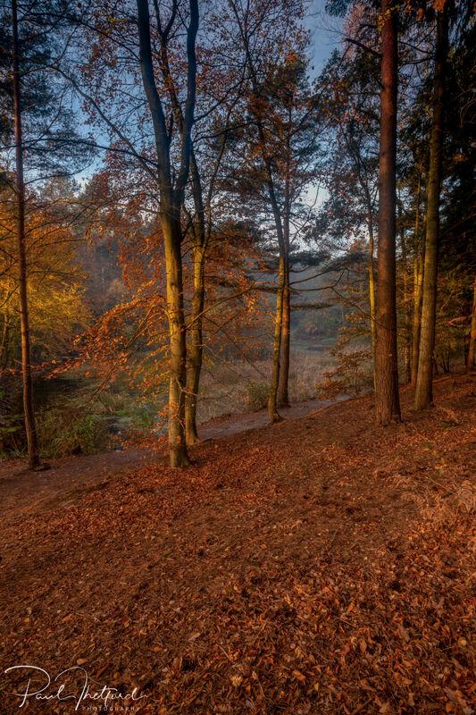Norfolk Autumn colours 7