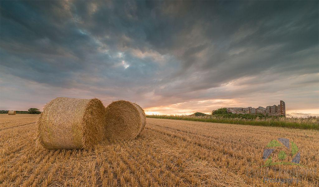 Harvest 2016 2