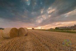 Harvest 2016 3