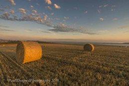 Last days of  Harvest. Dawn 6