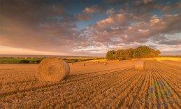 Golden Harvest 2016 3
