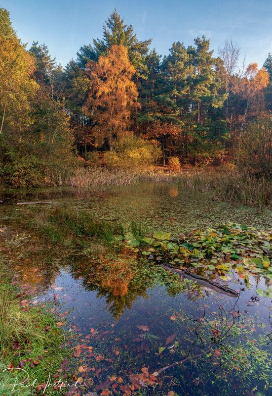 Norfolk Autumn colours 8