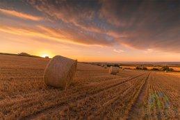 Golden Harvest 2016 4