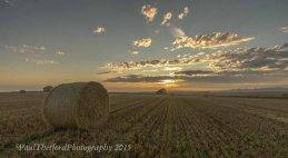 Last days of  Harvest. Dawn 8