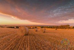 Golden Harvest 2016