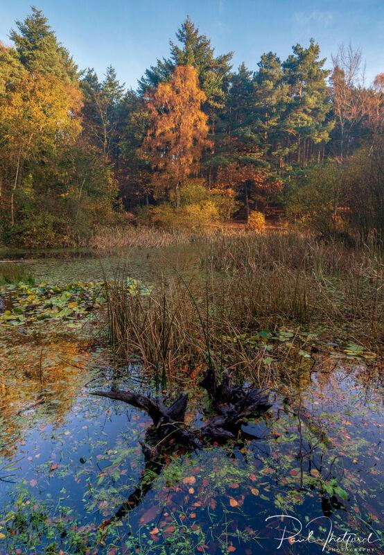 Norfolk Autumn colours 9