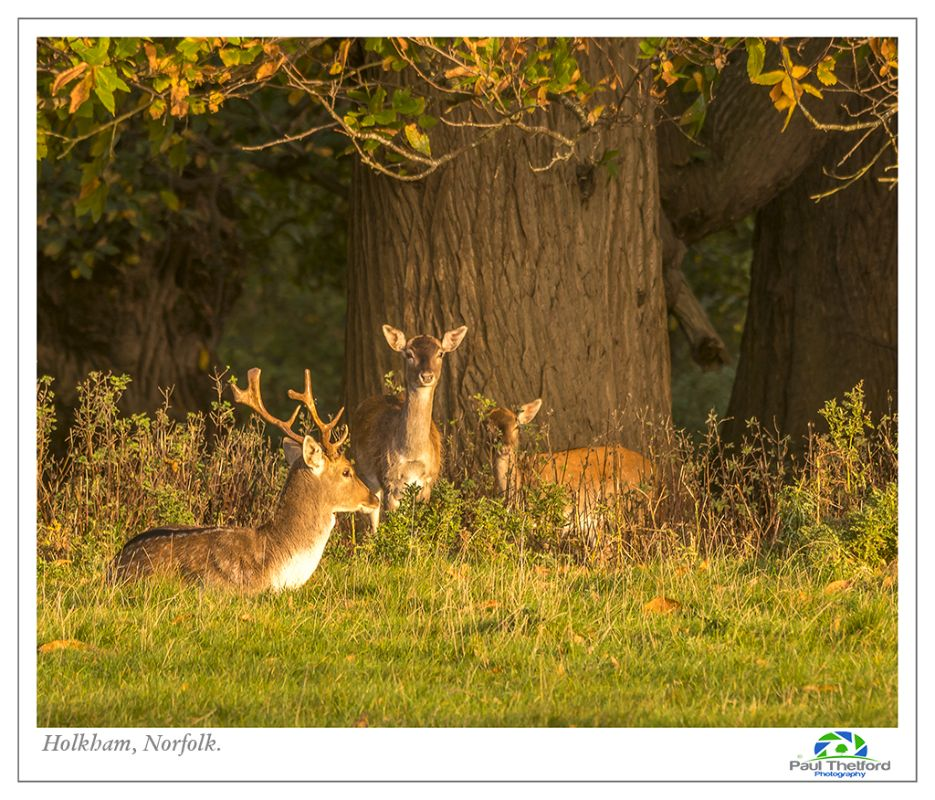 Autumn Deer 6